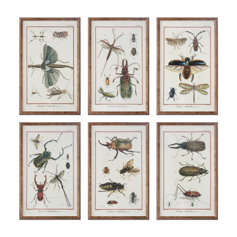 Wolberg Electrical Supply Inc in Albany, New York, United States, Uttermost 33628, Uttermost Multi Insect Prints, S/6, Multi Insects